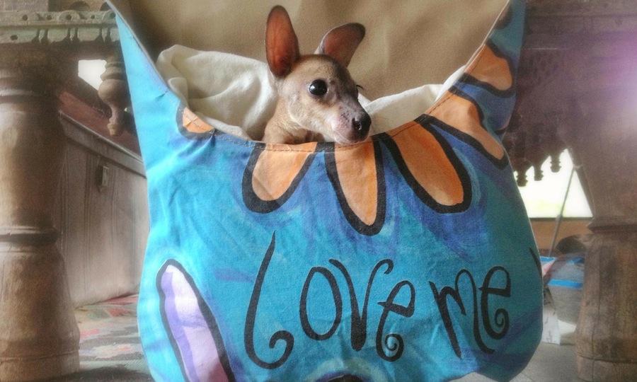 love-me-joey-kangaroo-pouch