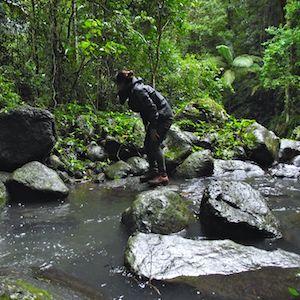 bushalk-lamington-national-park-Christmas-Creek